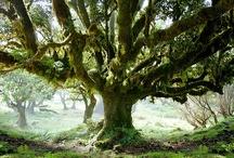 Trees 'n Woods 'n Moss