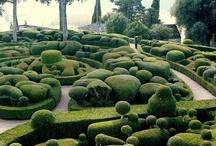 Fancy bushes 'n hedges