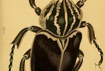 Bug  / by Wookey Maru