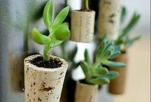 Reuse - Garden & Plants