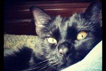 My Cat / Neko, my little furry friend (=^.^=)