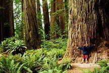 HUG A TREE / I love trees