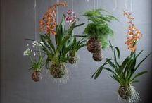 Plants that bring Joy