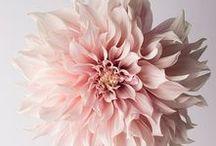 Flowers / Meseszép virágokról.Tulipánok...rózsák...stb. :)