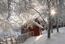 Winter Sceneries
