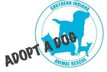 Resources / Local Humane Societies, Pet Shelters, Rescue Organizations and more