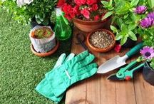 Garden - Let's Grow! / Gardening ideas, tips and tricks for busy people who want to grow vegetables and herbs - but don't have a lot of time. Garden | Let's Grow / by CalmHealthySexy