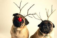 Santa's Little Helpers / Our furry little friends help us get in the holiday spirit!