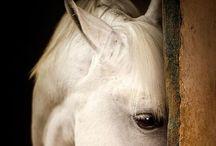 Nature - Horses
