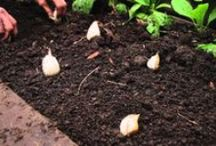How to Grow your Own Food - Videos / Food Self-Sufficiency. Growing Organic Food at Home. A guide from experts on how to grow your own vegetables.