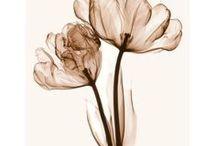 fleurs en transparence