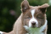 Cute Critters :)