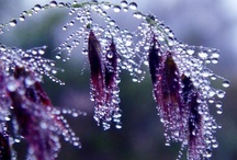Nature: Raindrops, dew