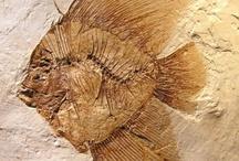 Naturte: Fossils