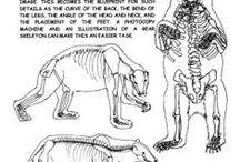 anatomía / dibujo