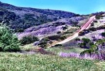 Aliso & Woods Canyons / by The Ranch at Laguna Beach