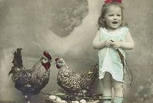 Raising Chickens / by Life is a Garden