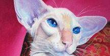 Siamese & cats