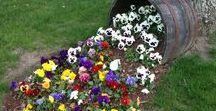 kertépítés-kertszépítés / ötletek ahhoz, hogy megálmodhassam és megvalósíthassam egyéni és szemet gyönyörködtető kertemet!
