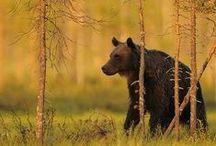 Wildlife / by John Harper