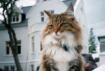 Cats / by John Harper