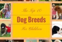 Dog Breeds / Posts and infographics about dog breeds / by Long Live Dog