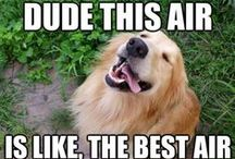 Dog Memes / Just some dog memes to add a little humor to your day / by Long Live Dog