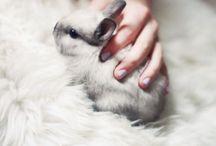 Cute Bunnies!!