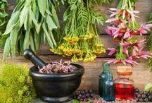 Herbs   Healing