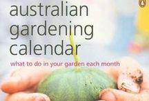 Info and Tips   Vegetable Garden