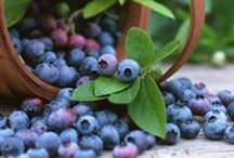 How To Grow   Fruit and Vegies / 'How To' information to get you started on growing a range of fruit and vegetables.