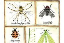 Beneficial Insects   Attracting and Identifying / Learn how to attract and identify insects that will actually benefit your vegetable garden.