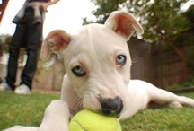 Dog Training and Infographics