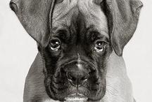 Dogs in Black & White