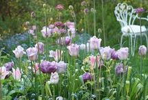 Garden Inspiration / by Kari Kryder