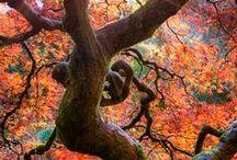 Trees / fák