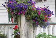 Hobbikert / virágok zöldnövények szaporítása