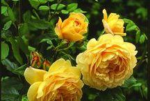 Beautiful Flowers 2 / virágok