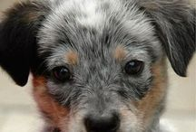 DOGGIES / Dogs