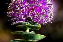Különleges virágok...
