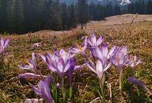 Wiosna w Tatrach / Przedstawiamy wiosenne klimaty w Tatrach i na Podhalu