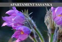 Apartament Sasanka / Przestronny Apartament Sasanka przeznaczony dla maksymalnie pięciu osób, położony jest na drugim piętrze w budynku o zabudowie bliźniaczej, którego architektura nawiązuje do stylu podhalańskiego. więcej na:http://www.smrekowapolana.pl/apartament/sasanka