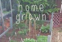 - Seasonal, local & home grown / Resource for home grown produce, grow your own, seasonal eating, organic, local, self sufficient.