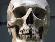 Skulls / skulls, animal, human, etc…