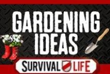 Gardening Ideas / Gardening Ideas, garden tips, growing advice for creating a robust and healthy garden. Gardening DIY, gardening on a budget, survival gardening  and homemade garden projects for super outdoor success. For the best gardening tips and garden skills, follow Survival Life on Pinterest, Facebook and on our blog at survivallife.com / by Survival Life | Prepping - Outdoors Ideas