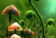 plants, lichens, mushrooms / by Maria Takacs