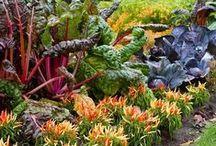 kertészkedés_gardening