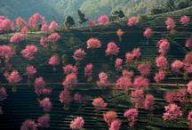 Pink & Greens / Stieglitz world