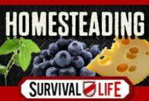 Homesteading /  Homesteading DIY, Skills  and How To's for the homestead. Best homemade recipes and preparedness tips for homestead survival. Homestead DIY projects and self reliance ideas for survival. Cool tutorials with step-by-step instructions for off the grid, preparedness. Gardening, farming, cooking, canning, livestock, natural health, craftsmanship, homemaking skills and more. Follow Survival Life on Pinterest, Facebook and on our blog at survivallife.com for the best homesteading tips. / by Survival Life   Survival Prepping
