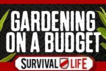 Gardening on a Budget / by Survival Life | Prepping - Outdoors Ideas
